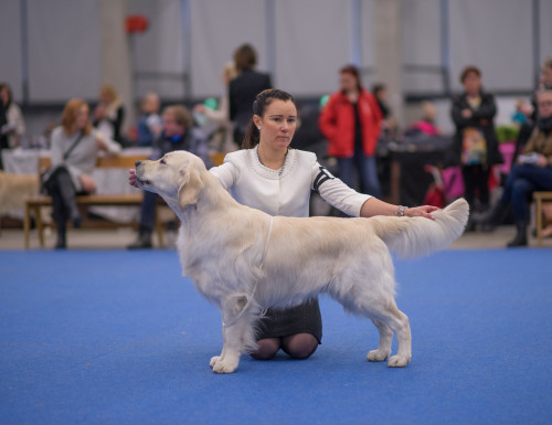 Top Show Golden 2016: FI MVA EE JMVA EUJV-15 HeJW-15 PMJV-15 Clearing Pond's Ice Man